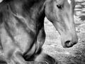 horses (8)